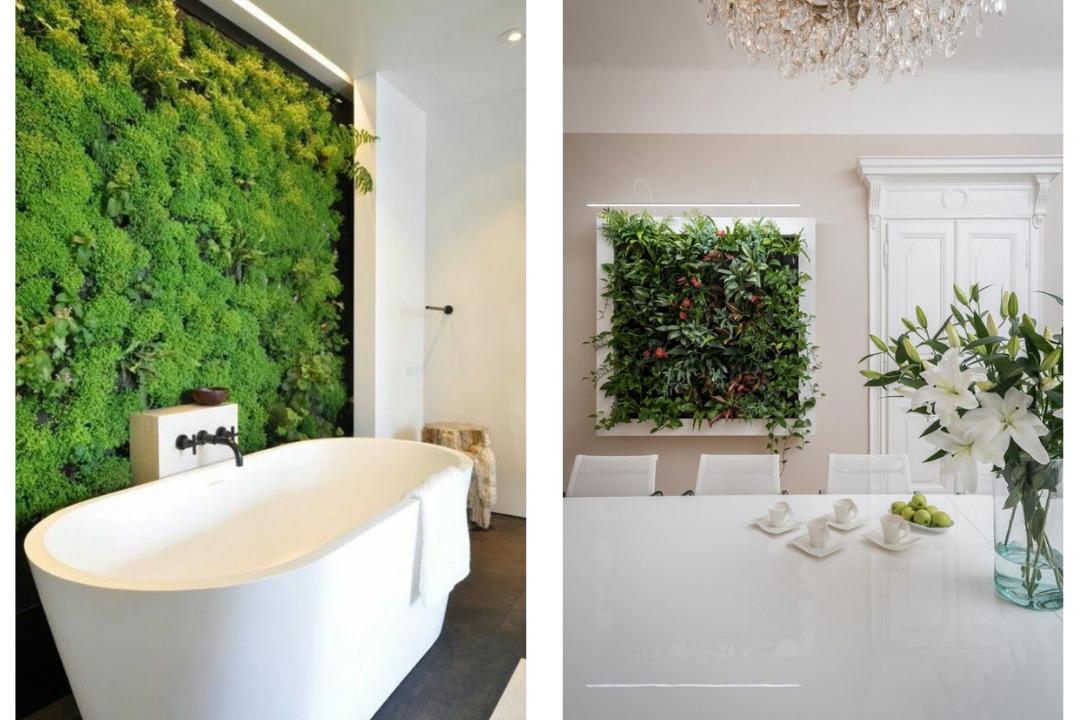 Esempi di pareti verdi: muschi stabilizzati e piante.